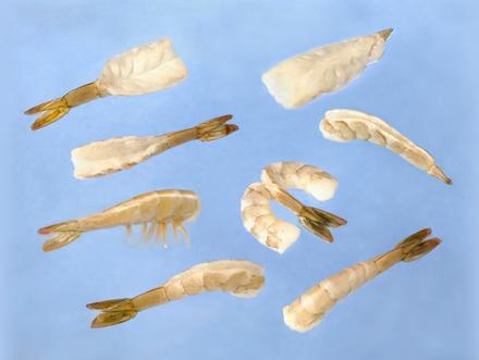 shrimp_img