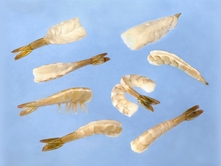 model-60-shrimp