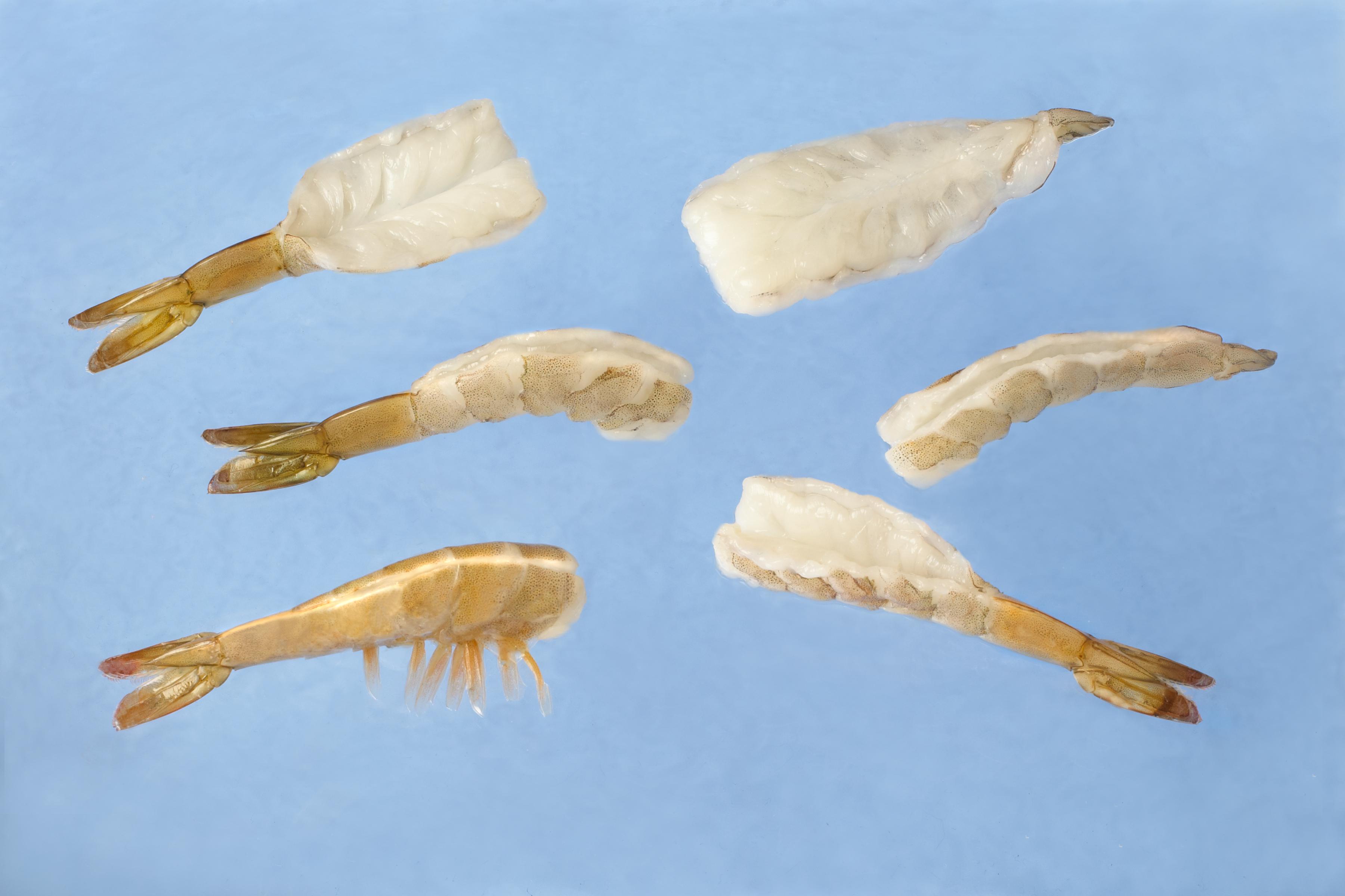 model-61-shrimp